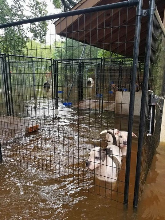 Shelter Dogs In Houston Impacted By Hurricane Harvey