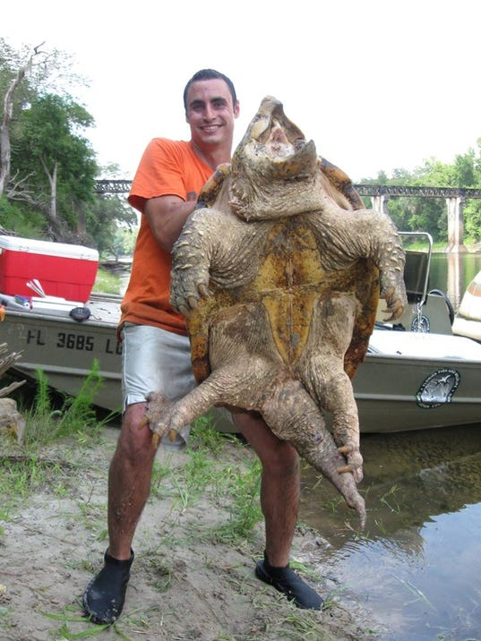 Largest freshwater turtle in North America