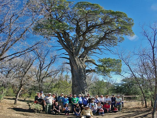 635906282526271312-big-tree-hike.jpg