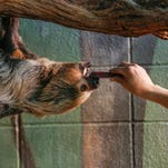 Sloth exhibit open at Dickerson Park Zoo