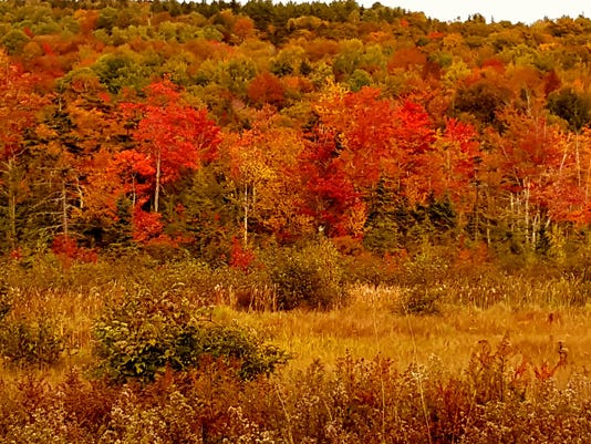autumn_underhill