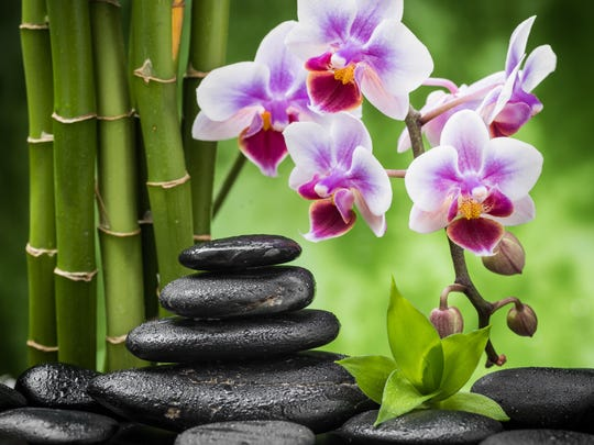The Naples Orchid Society has its show Saturday at Moorings Presbyterian in Naples.