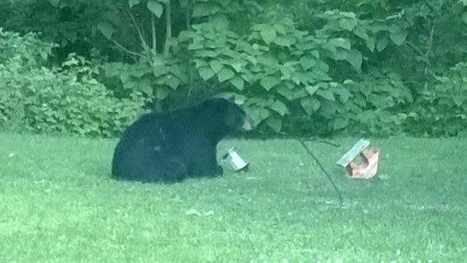 """The Indiana Department of Natural Resources says several Northern Indiana residents have reported a black bear rifling through trash and bird feeders. It has been seen """"walking on porches and standing against patio doors."""""""