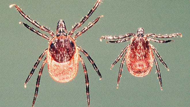 Deer ticks are the only breed that carry Lyme disease.