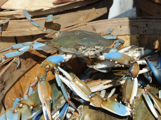 bluecrab-082515_WIL FISH SHIFT_JM005