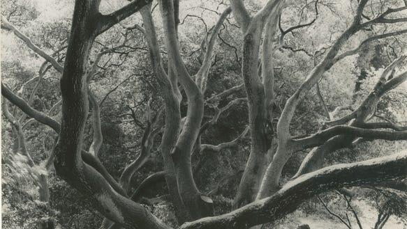 dor-trees