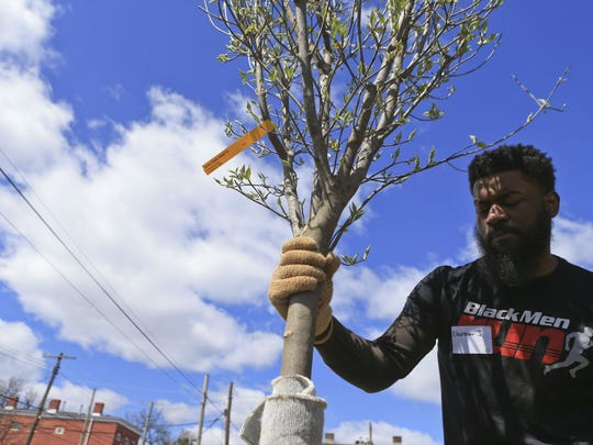 Volunteer Darrin Johnson holds a dogwood tree in place