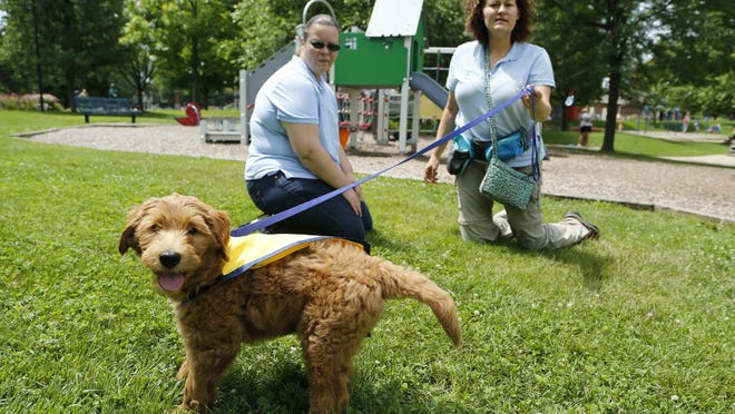 Sheryl Walker, left, and Julie Shaw walk Charlie, a nine-week-old puppy, through Columbian Park so the pup can experience new objects, people, sights and sounds Wednesday, July 22, 2015, in Lafayette. Shaw and Walker are with Stepping Stone Animal Training. Charlie is being trained to become an autism service dog. Shaw said she is hoping Charlie is ready to go into service in six to nine months.