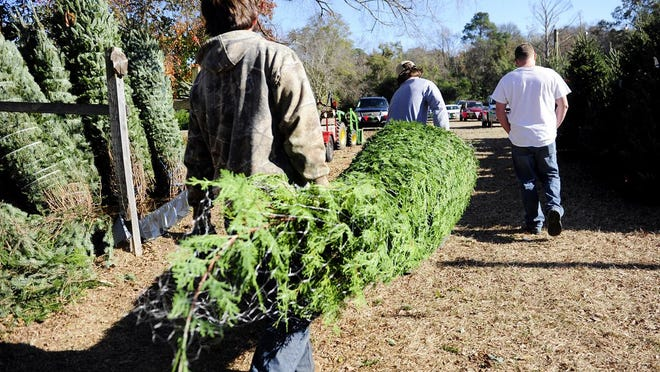 Ashley Braxton (from left) and her children, Cheyenne, 2, and Luke, 9, pick out a Christmas tree Monday morning at Snowy Mountain Christmas Trees at the National Plaza at 2816 Washington Road, one of three lots that opened Nov. 21.