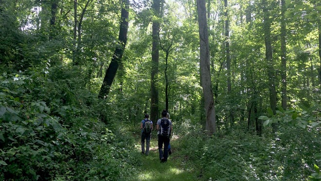 Visitors to OM (Oshun Mountain) Sanctuary in the Richmond Hill section of Asheville walk down a nature path. The Sanctuary will celebrate the permanent conservation of 42 acres of forest on the property with an open house on Saturday.