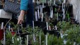 More than 50 people were waiting in line for the 21st Annual Master Gardeners Plant Sale to open for the chance to buy some of the hundreds of plants on sale.