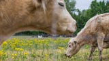 This new 33-acre farm in Fishers will offer the community a chance to pick their own veggies, get up and close with animals and see how a farm runs.