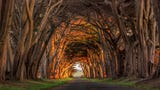 Tunnels of trees have a way of making you feel safe, like walking into a real-life fairy tale.Here are 10 places where you can capture that feeling.