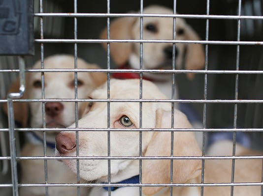 'Muttbombing' selfies to help dogs find homes