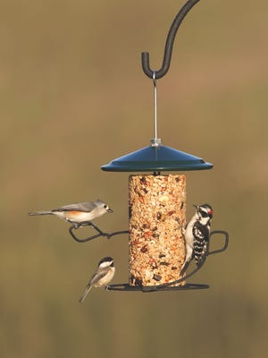 Shepherds hooks are one of the ways for beginners to get into bird feeding.
