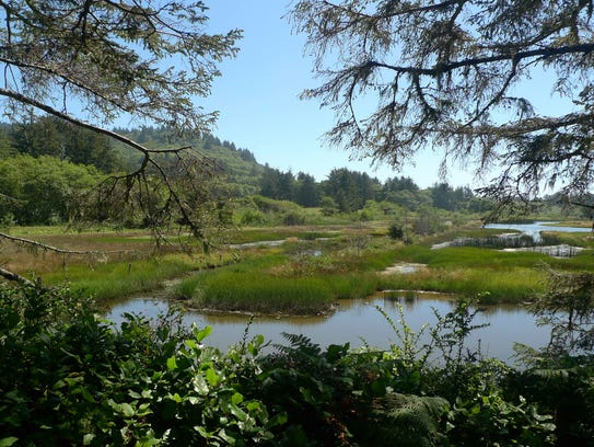 Sitka Sedge State Natural Area recently opened to the