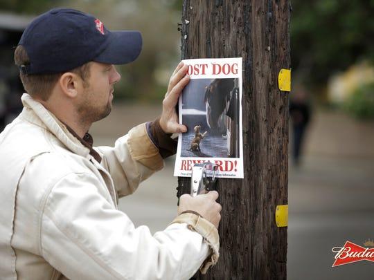 """Lost Dog"""