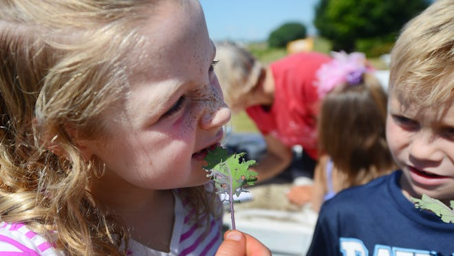 The YMCA Kids Camp at the Howard YMCA has a lush vegetable garden growing this summer under the tutelage of a master gardener. Natalie Squire, left, samples a sprig of kale freshly picked from the garden.