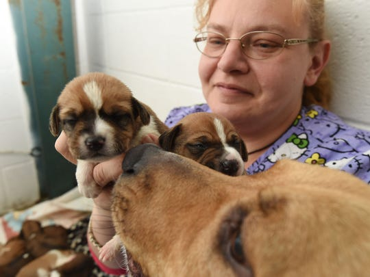 Carolyn Carter, shelter manager at the Humane Society of North Central Arkansas, spends time Monday with nine puppies found abandoned on Saturday. Susie, the puppies' surrogate mom, checks in.
