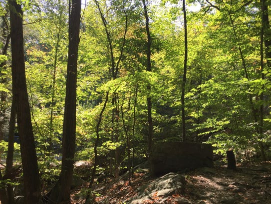 Great hiking trails abound at the New Weis Center.