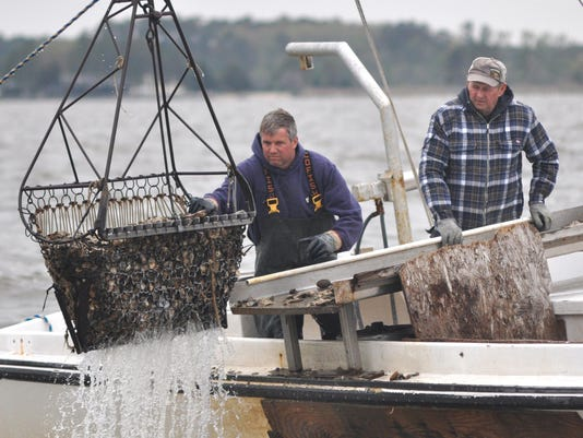 sby oysters dredge.jpg