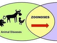 "4-H's healthy approach to zoonotic diseases …. because ""People and Pigs get the Flu"""