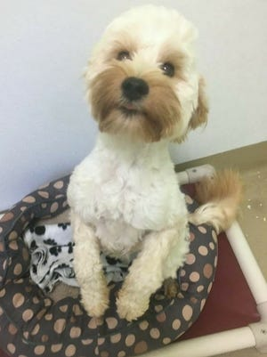 I'm a young terrier mix who's sweet and loving -- looking for you!