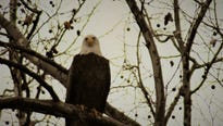 The Codorus State Park Eagle Cam is back, and the star of the show isn't too happy about it.