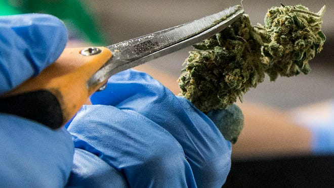 Three companies are eyeing the Scottsdale Airpark for new medical-marijuana dispensaries. Scottsdale represents one of Arizona's highest concentrations of patients authorized to use the drug. Marijuana buds are trimmed to prep them for dispensaries.