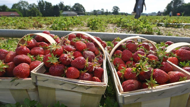 It's almost time to start picking summer fruits.