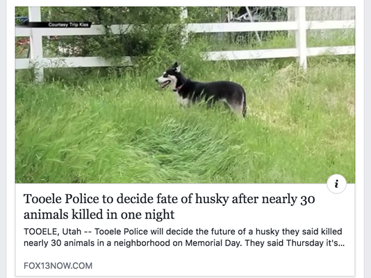 636634101960314350-husky-killing-spree2.png