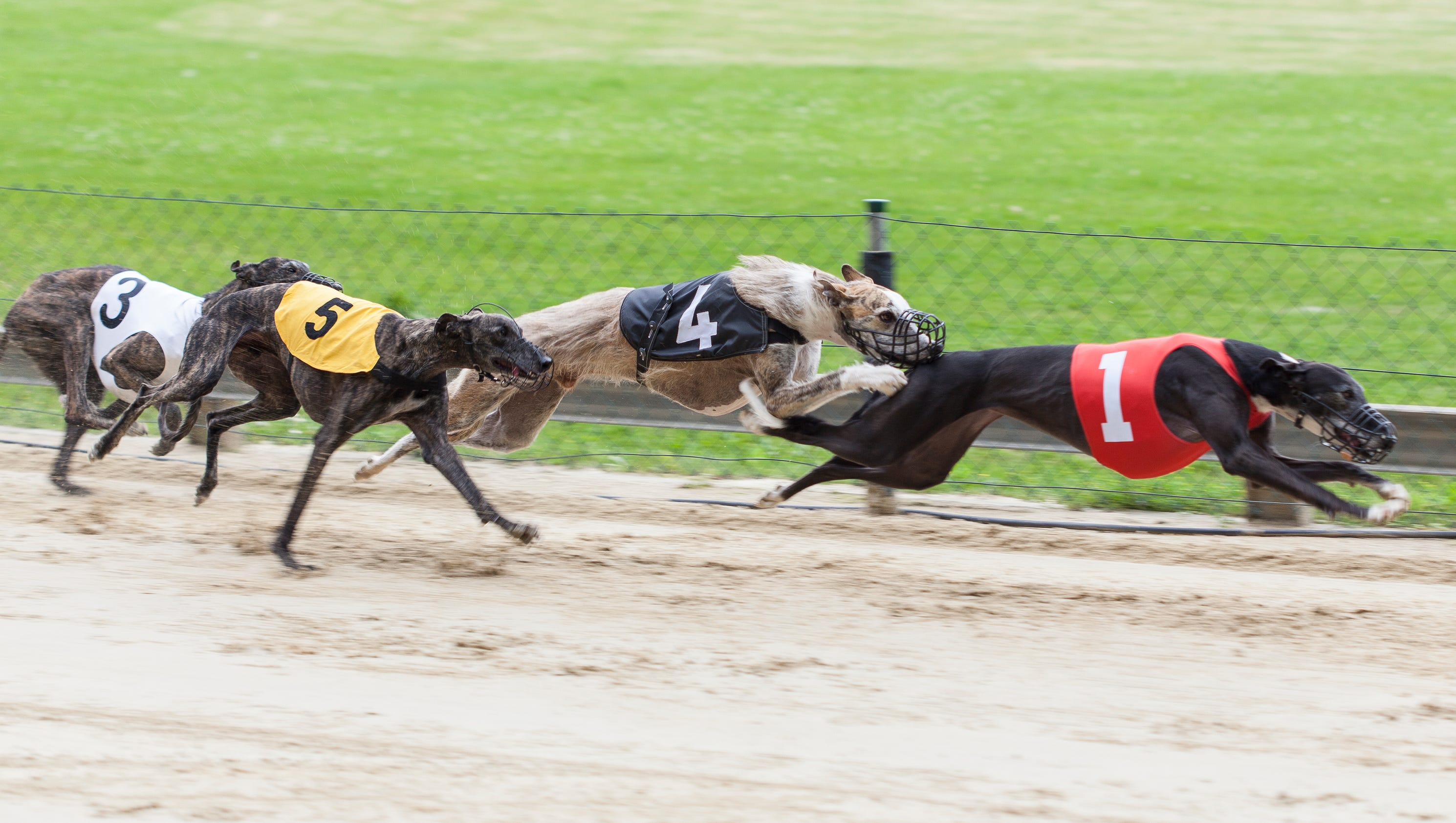 Where Is Greyhound Racing Legal