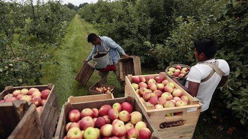 In this July 9, 2015 file photo, workers harvest early apples at Samascott Orchards in Kinderhook, N.Y. The U.S. economy posted a much bigger rebound in growth during the spring than previously reported, thanks to improvements in a number of areas including consumer spending and business investment.