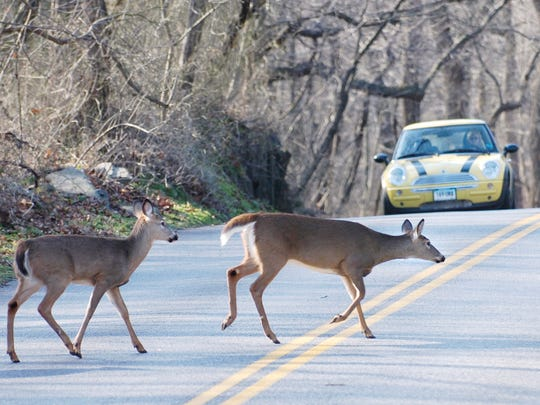 TheInsurance Institute for Highway Safety notes that deer-vehicle collisions in the U.S. cause more than 200 fatalities annually.