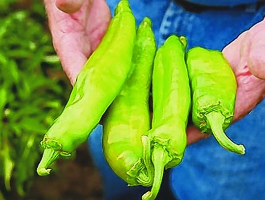 Hatch green chiles are used in New Mexico-style chili.