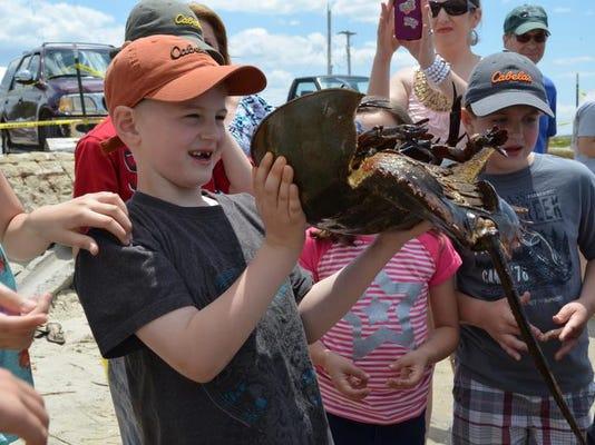 Horseshoe Crab 2.jpg