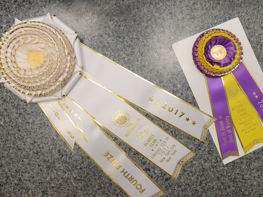 Awards won by Lake this year in the Westminster Kennel Club Dog Show in NYC.
