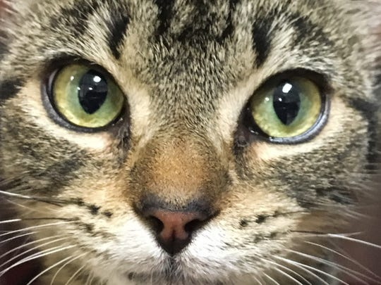 """Dory is one of the 19 dogs and 13 cats (pet refugees) from Hurricane Harvey in Texas. Titusville SPCA brought the animals to Brevard to help them find """"furever"""" homes."""