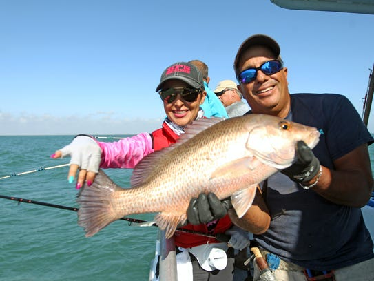 This large mangrove or gray snapper was one of the