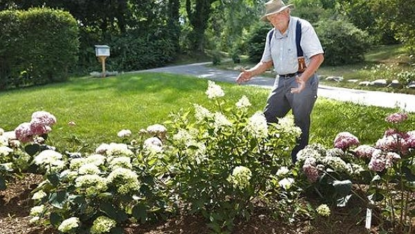 Hydrangea expert Mal Condon talks about how to grow brightly colored hydrangeas in Duxbury on Tuesday, July 21, 2020.