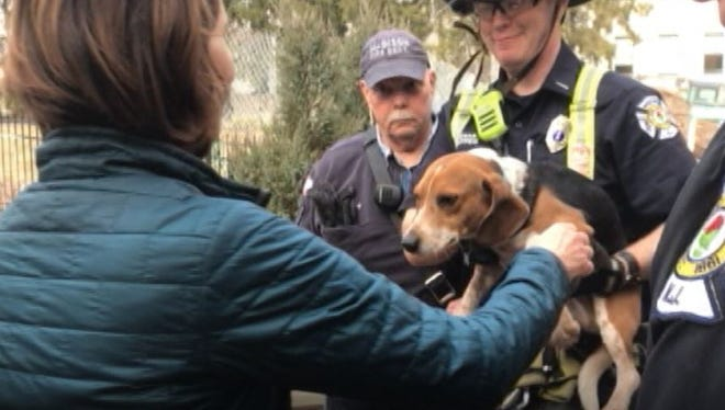 Members of the Madison Fire Department Confined Spaces Unit work to rescue Teddy, a 4-year-old beagle, from a dry well under the rear deck of a Maple Avenue home.