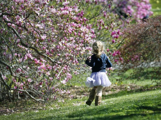 File photo: Addilyn Dence of Irondequoit runs toward magnolias in 2016.