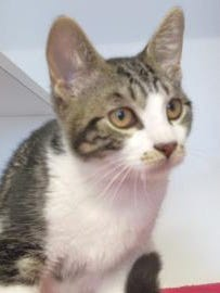 Tuggert is the Current-Argus pet of the day.