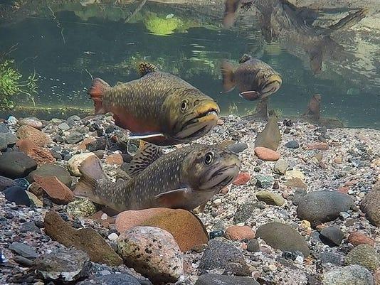 636342866236817769-Underwater-fish-photography-Pratt-1.jpg