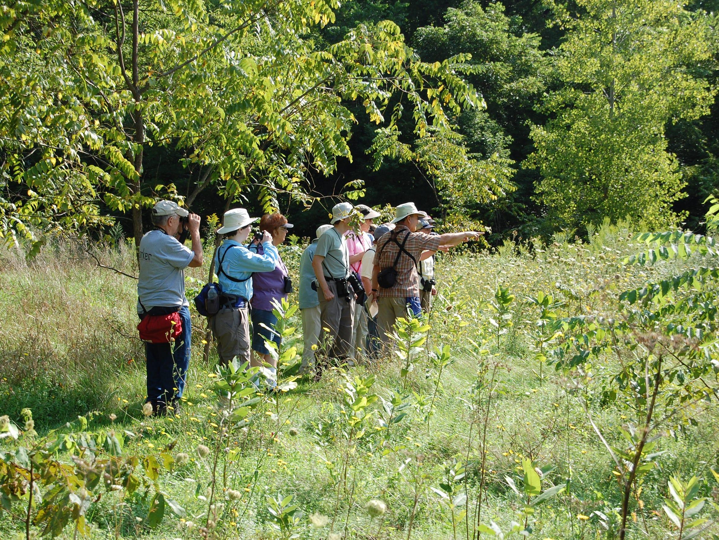Experts lead an annual butterfly walk in Ganargua Creek