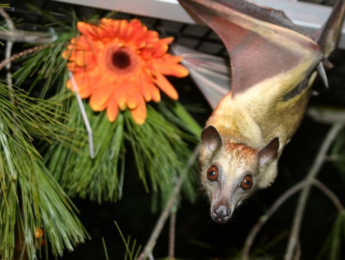 Learn how bats benefit us from May 27-29 at the Cranbrook