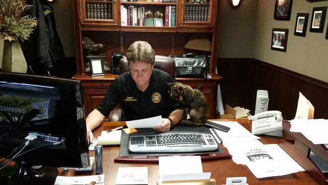 Cornbread the Cat watches as Baxter County Sheriff John Montgomery does paperwork in his office. The rescued feline is the department's unofficial mascot and provides officers and employees a chance to de-stress during their hectic days.