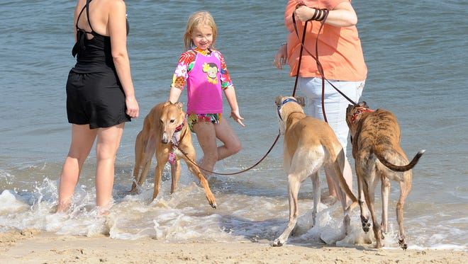 The Annual Greyhounds at the Beach Event brought dogs from all over the East Coast to Dewey Beach on Saturday Oct. 6th for a great day at the beach.