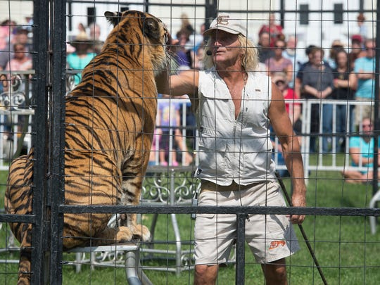 Brunon Blaszak pats a tiger during the Bruno's Tigers