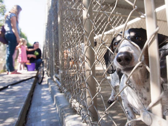 A pair of dachshunds watch the action from their enclosure as members of St. Paul's Episcopal Church in Ventura say blessings over them and their brethren at the Canine Adoption and Rescue League facility in Santa Paula.